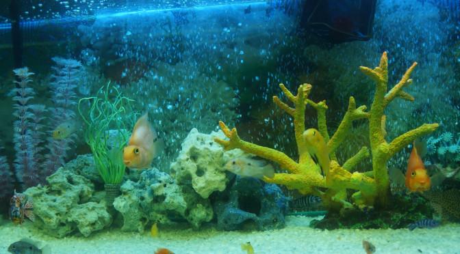 Наш 180 литровый аквариум с малавийскими цихлидами